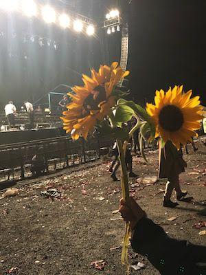 フジロック2017、ホワイトステージとひまわり